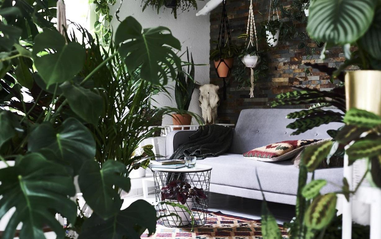 Des Plantes Pour Un Salon Cosy
