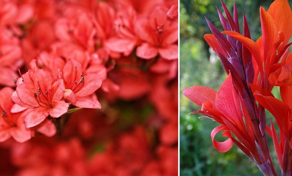 Fleurs Rouges