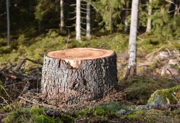 Se Débarrasser D'une Souche D'arbre