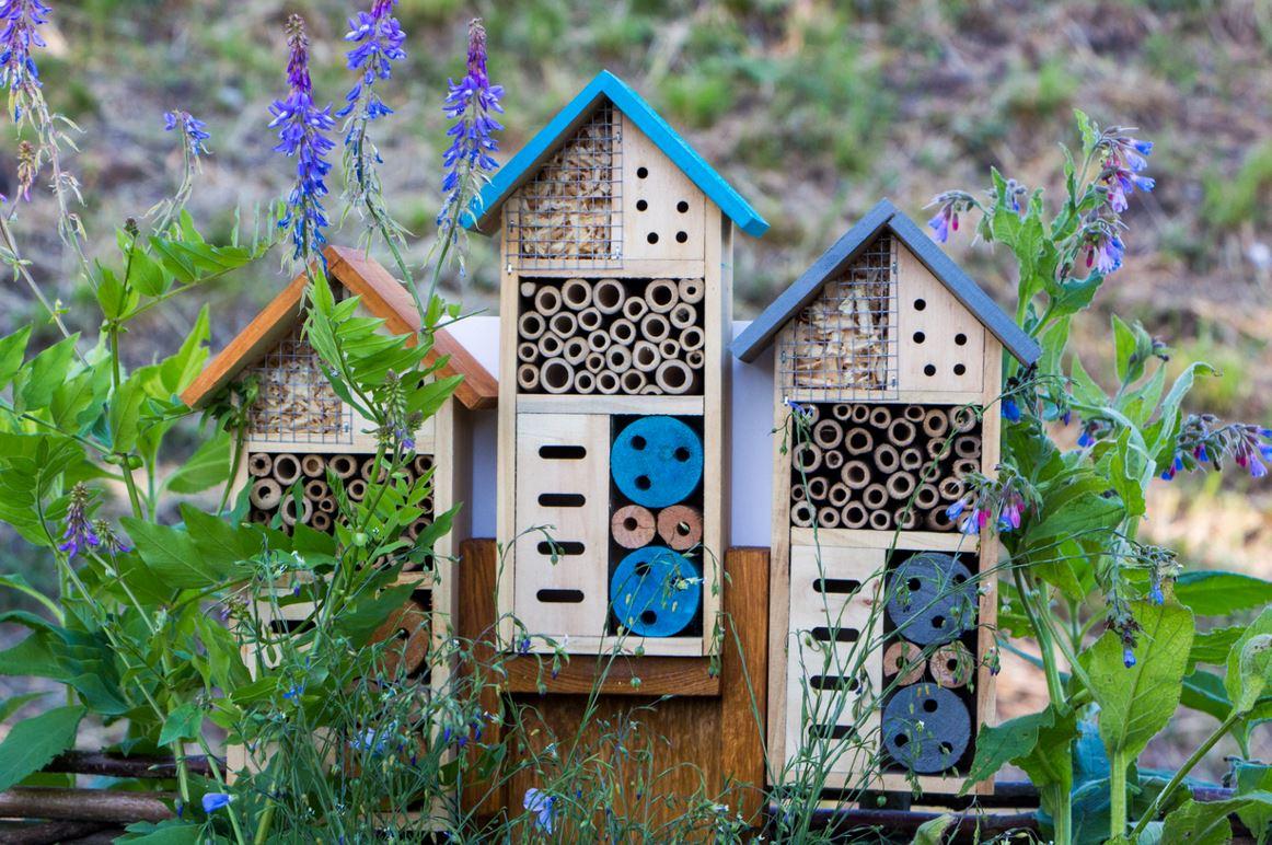 Installer Une Maison à Insectes