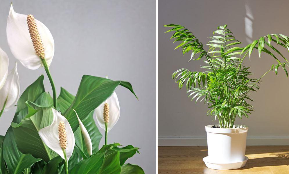 Plantes D'intérieur Qui N'ont Pas Besoin De Lumière